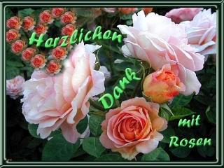 dank-rosen - Kopie